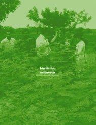 moringa-tree-nutritional-findings