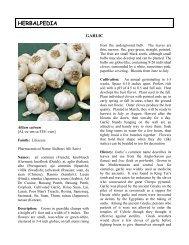 Allium sativum - HerbWorld