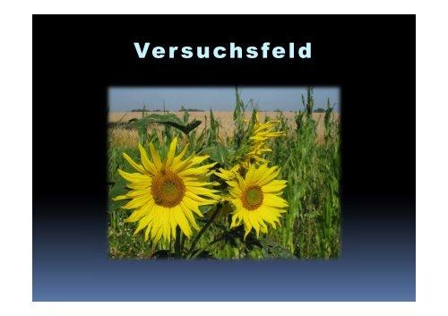 Versuchsfeld - Agrarbildungszentrum Landsberg am Lech
