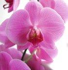 Alles für Ihre Orchideen - Seite 2