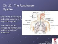 Chapter 22 - Respiratory System