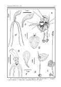 Orchidoideae 66 species, as well as some novelties that rep - Page 5