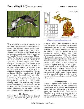 Eastern Kingbird - Michigan Breeding Bird Atlas Website