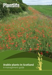 Arable plants in Scotland - Plantlife