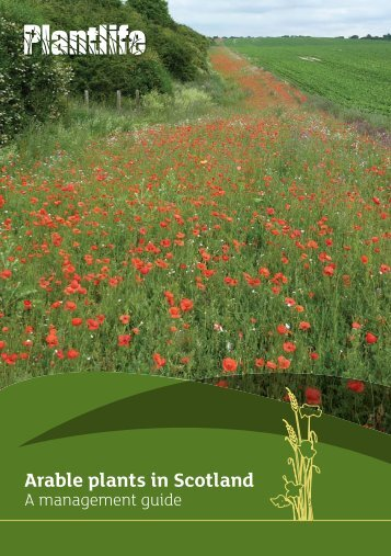 Arable plants in Scotland - Plantlife
