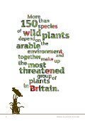 Arable plants in Scotland - Plantlife - Page 2