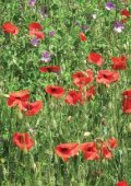 Arable plants in Scotland - Plantlife - Page 4