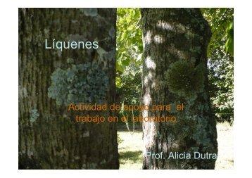 Líquenes - Uruguay Educa