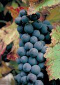 Les Vins VQPRD - Page 2