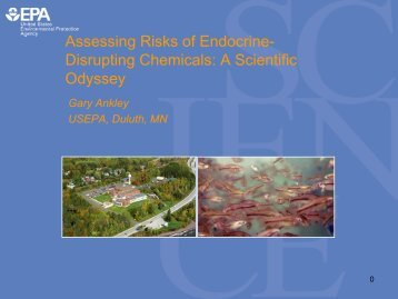 Assessing Risks of Endocrine- Disrupting Chemicals: A Scientific ...