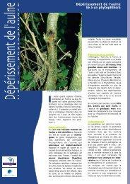 Dépérissement de l'aulne lié à un phytophthora - Agence de l'Eau ...