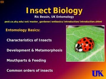 MG Entomology Basics