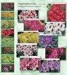 4. rhododendron fertigware - Baumschule Hachmann - Page 2