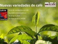 Nuevas variedades de café - Sintercafe