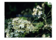 Wild service tree - Result of research and management ... - valbro.de