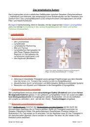 Das lymphatische System - Hier entsteht eine neue Internetpräsenz