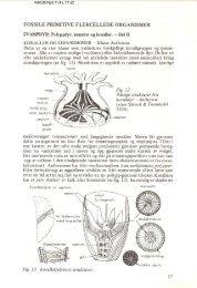 Fossile primitive flercellede organismer del II pdf - NAGS
