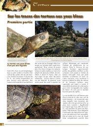 Sur les traces des tortues aux yeux bleus - Association du refuge ...