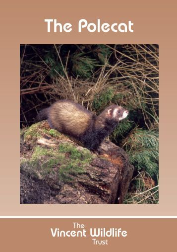 The Polecat - The Vincent Wildlife Trust