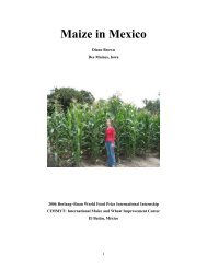 Maize in Mexico - The World Food Prize