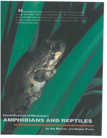 Identification of Montana's Amphibians and Reptiles
