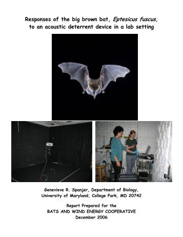 Responses of the big brown bat, Eptesicus fuscus, to an acoustic ...