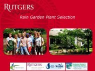 Rain Garden Plant Selection