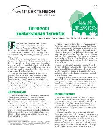Formosan Subterranean Termites - Texas A&M AgriLife - Texas ...