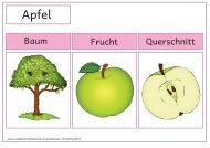 Baum Frucht Querschnitt - Zaubereinmaleins