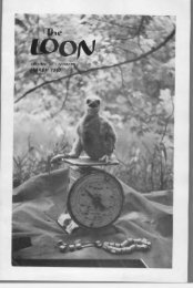 the identification of harlan's hawk - Minnesota Ornithologists' Union