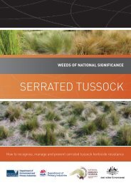 Serrated tuSSock - Weeds Australia