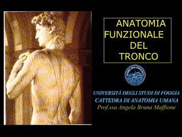 Anatomia del Tronco - Medicina e chirurgia - Università degli Studi ...