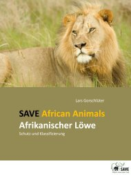 Afrikanischer Löwe - SAVE Wildlife Conservation Fund