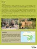 Afrikanischer Löwe - SAVE Wildlife Conservation Fund - Seite 4
