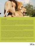 Afrikanischer Löwe - SAVE Wildlife Conservation Fund - Seite 5