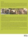 Afrikanischer Löwe - SAVE Wildlife Conservation Fund - Seite 6