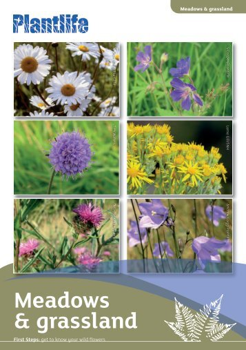 Meadows & grassland - Plantlife