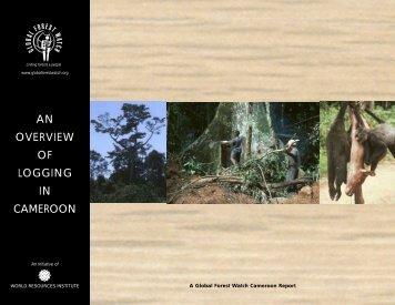 an overview of logging in cameroon - Insitu Wildlife Conservation ...