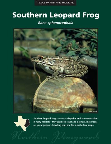 Southern Leopard Frog - The State of Water