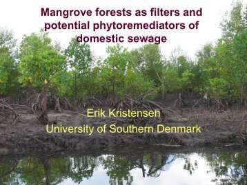 Kristensen, E. (2007). Mangrove forests as filters and ... - PUMPSEA