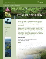 What Are Wetlands - Ministry of Natural Resources - Ontario.ca
