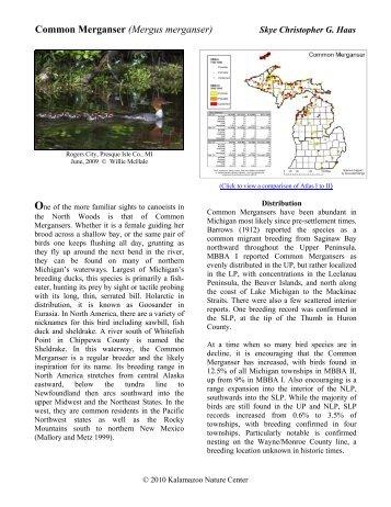 Common Merganser - Michigan Breeding Bird Atlas Website