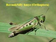 Kočárek 2011 - Orthoptera (pdf)