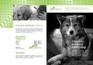 Interneto svetainės - Carodog