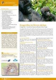 Berggorillas im Herzen Afrikas
