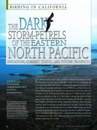 The Dark Storm-Petrels of the Eastern North Pacific - American ...
