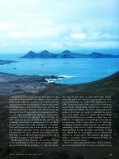 The Dark Storm-Petrels of the Eastern North Pacific - American ... - Page 2