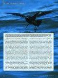 The Dark Storm-Petrels of the Eastern North Pacific - American ... - Page 3