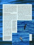 The Dark Storm-Petrels of the Eastern North Pacific - American ... - Page 4