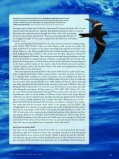 The Dark Storm-Petrels of the Eastern North Pacific - American ... - Page 6
